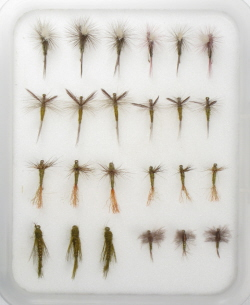 Insect Life Cycle Fly Selection - BWO