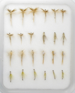 Insect Life Cycle Fly Selection - Cahill