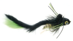 Umpqua Swimming Waterdog