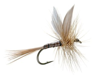Ginger Quill Dry Fly