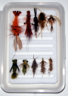 Carp Standard Fly Selection-10 Flies